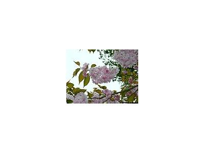 Photo Small Flowering Tree 5 Flower