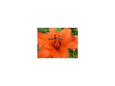 Photo Small Orange Flower 3 Flower