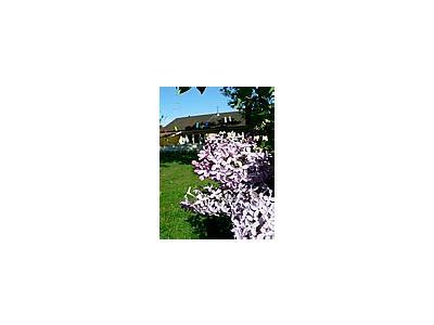 Photo Small Purple Lilac Flower