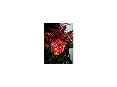 Photo Small Red Bouquet Flower