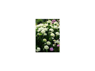 Photo Small White And Pink Flowers Flower