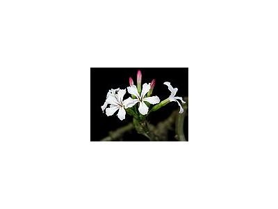 Photo Small Cactus 15 Flower