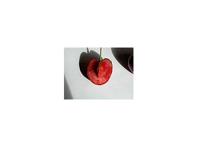 Photo Small Cherry 25 Food
