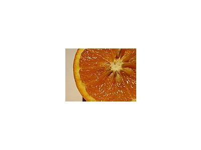 Photo Small Orange 7 Food