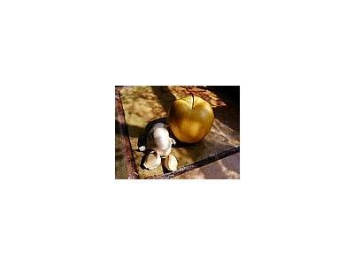 Photo Small Apple And Garlic Food