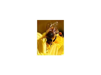 Photo Small Wasps Insect
