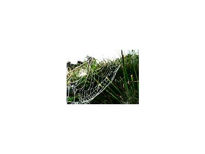 Photo Small Dew Covered Spider Web 2 Insect