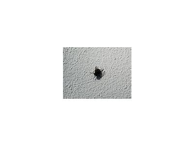 Photo Small Fly 3 Insect