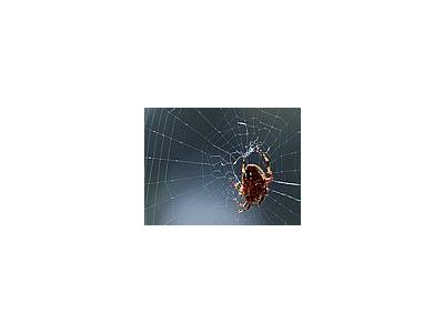 Photo Small Spider Web Insect