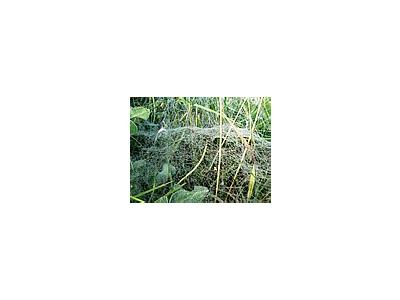 Photo Small Deep Covered Spider Web Insect