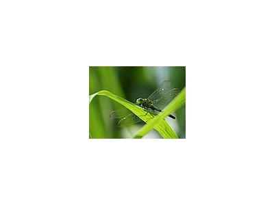 Photo Small A Bug In Louisiana Insect