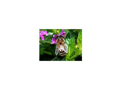 Photo Small Bee Insect