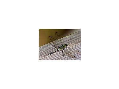 Photo Small Bug 3 Insect