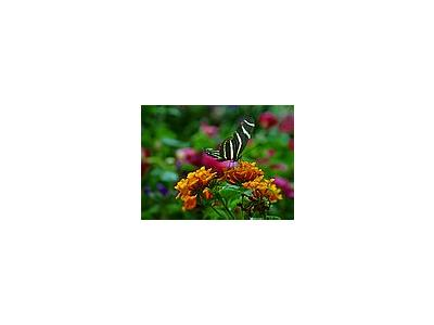 Photo Small Butterfly 3 Insect