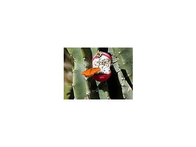 Photo Small Butterfly And Cacti Insect