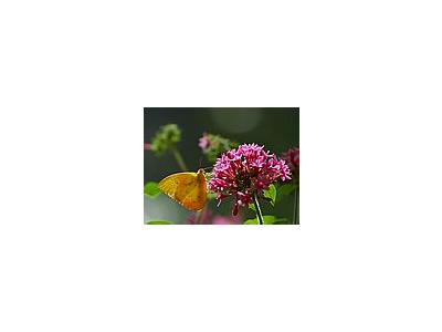 Photo Small Butterfly Flower Insect