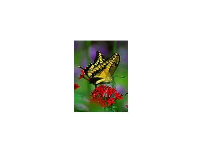 Photo Small Butterfly Flower 2 Insect