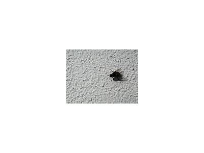 Photo Small Fly Insect