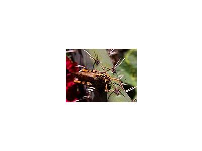 Photo Small Grasshoppers Insect