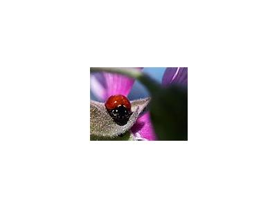 Photo Small Lady Bug Insect