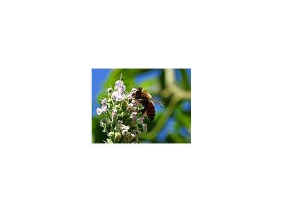 Photo Small Pollinating Bee Insect