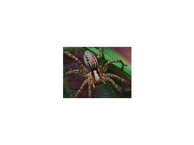 Photo Small Spider 4 Insect