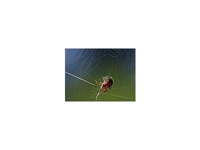 Photo Small Spider Web 2 Insect