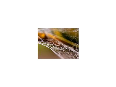 Photo Small Spiderweb 3 Insect