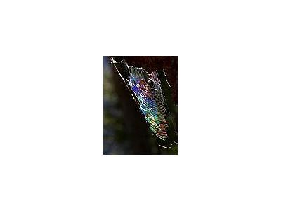 Photo Small Spiderweb 4 Insect