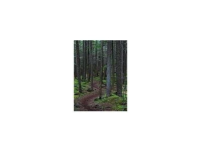 Photo Small Forest Trail Landscape