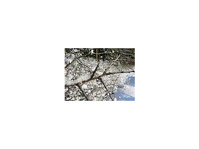 Photo Small Frost On Tree Twig Landscape