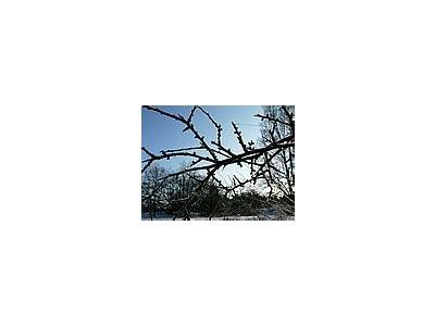 Photo Small Frostbitten Twig Landscape