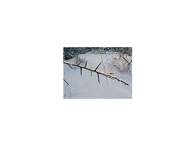 Photo Small Frostbitten Twig 2 Landscape
