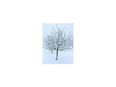 Photo Small Fruit Tree In Winter Clothing Landscape