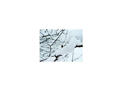 Photo Small Snow Branch Landscape