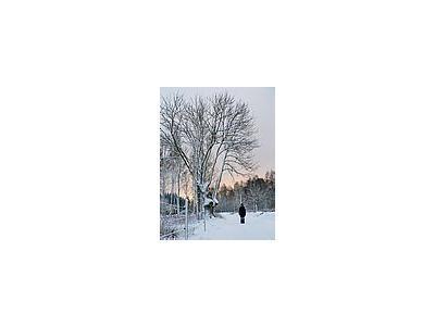 Photo Small Snow White Tree Landscape