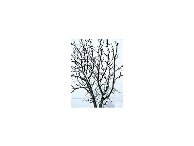 Photo Small Snow White Tree 2 Landscape