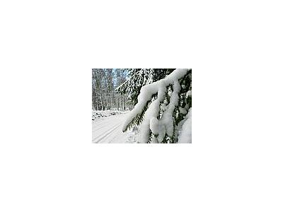 Photo Small Snowy Branch Landscape