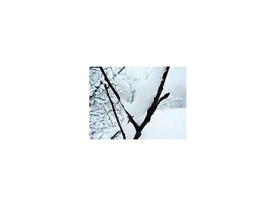 Photo Small Snowy Branch 2 Landscape