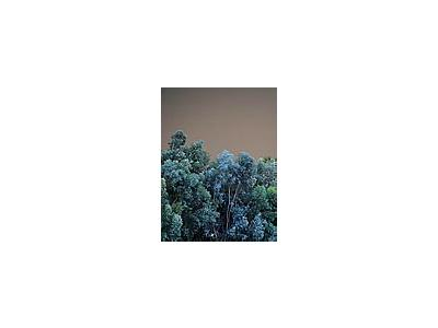 Photo Small Wood Trees Landscape