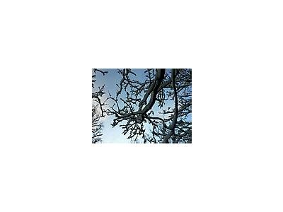 Photo Small Snowy Tree Branch Landscape