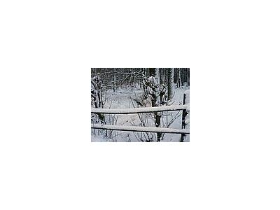 Photo Small Snowy Wood Fence Landscape