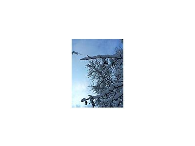 Photo Small Snowy Tree Landscape
