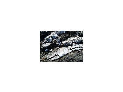 Photo Small Rock Close Up Landscape