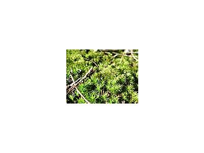 Photo Small Moss Landscape