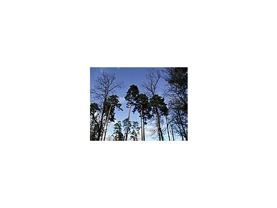 Photo Small Forest 62 Landscape