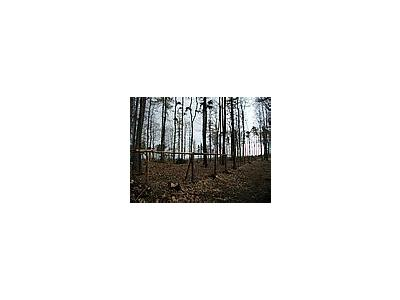 Photo Small Forest 71 Landscape