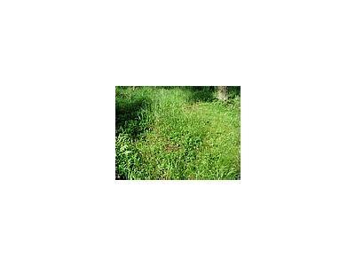 Photo Small Grass 2 Landscape