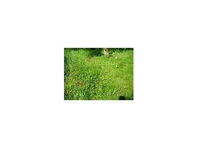 Photo Small Grass 3 Landscape