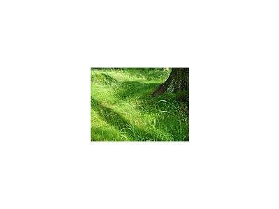Photo Small Grass 8 Landscape